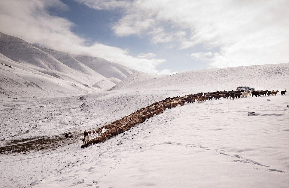 Cuộc sống của những người thợ săn bằng đại bàng ở miền Tây Mông Cổ (Phần I) Ảnh 14