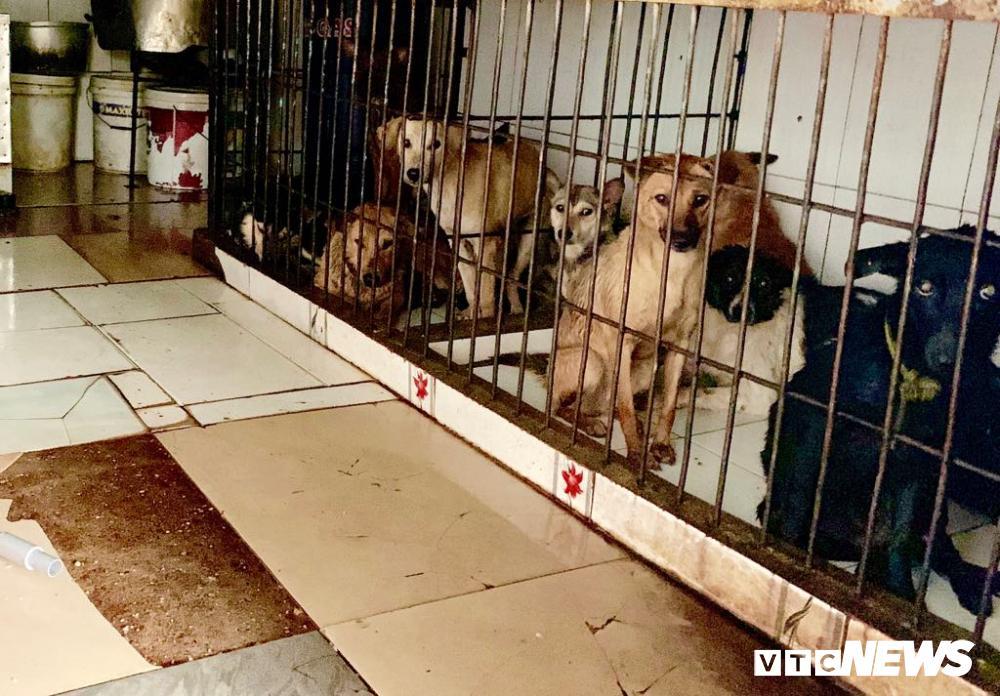 Chính quyền kêu gọi từ bỏ thói quen ăn thịt chó, chợ chó nổi tiếng TP.HCM vẫn 'hút' khách Ảnh 8
