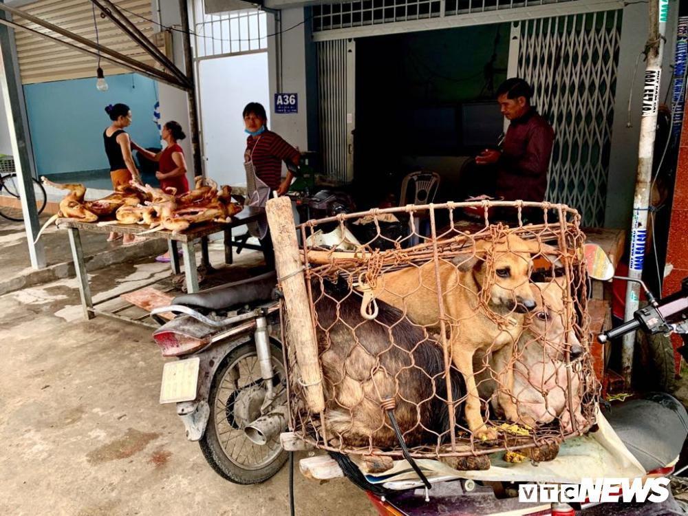 Chính quyền kêu gọi từ bỏ thói quen ăn thịt chó, chợ chó nổi tiếng TP.HCM vẫn 'hút' khách Ảnh 17