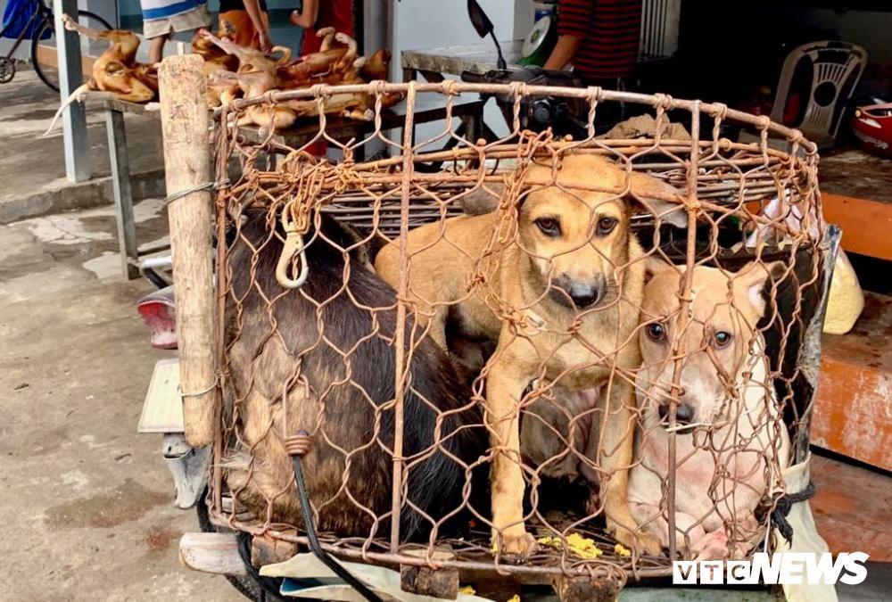 Chính quyền kêu gọi từ bỏ thói quen ăn thịt chó, chợ chó nổi tiếng TP.HCM vẫn 'hút' khách Ảnh 6