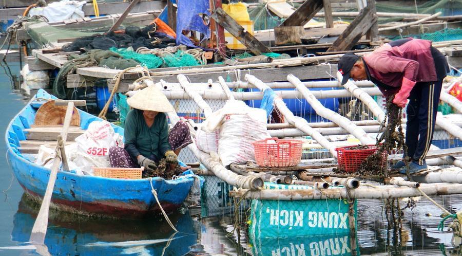 Ngày mới ở làng cá Mân Quang Ảnh 3