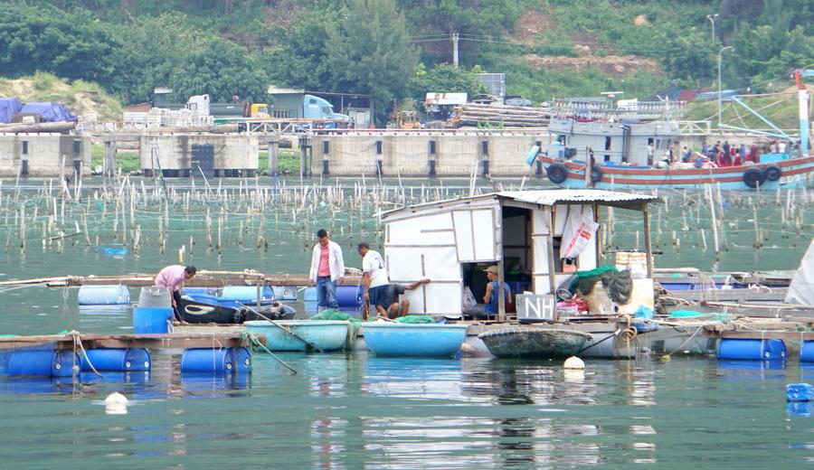 Ngày mới ở làng cá Mân Quang Ảnh 2