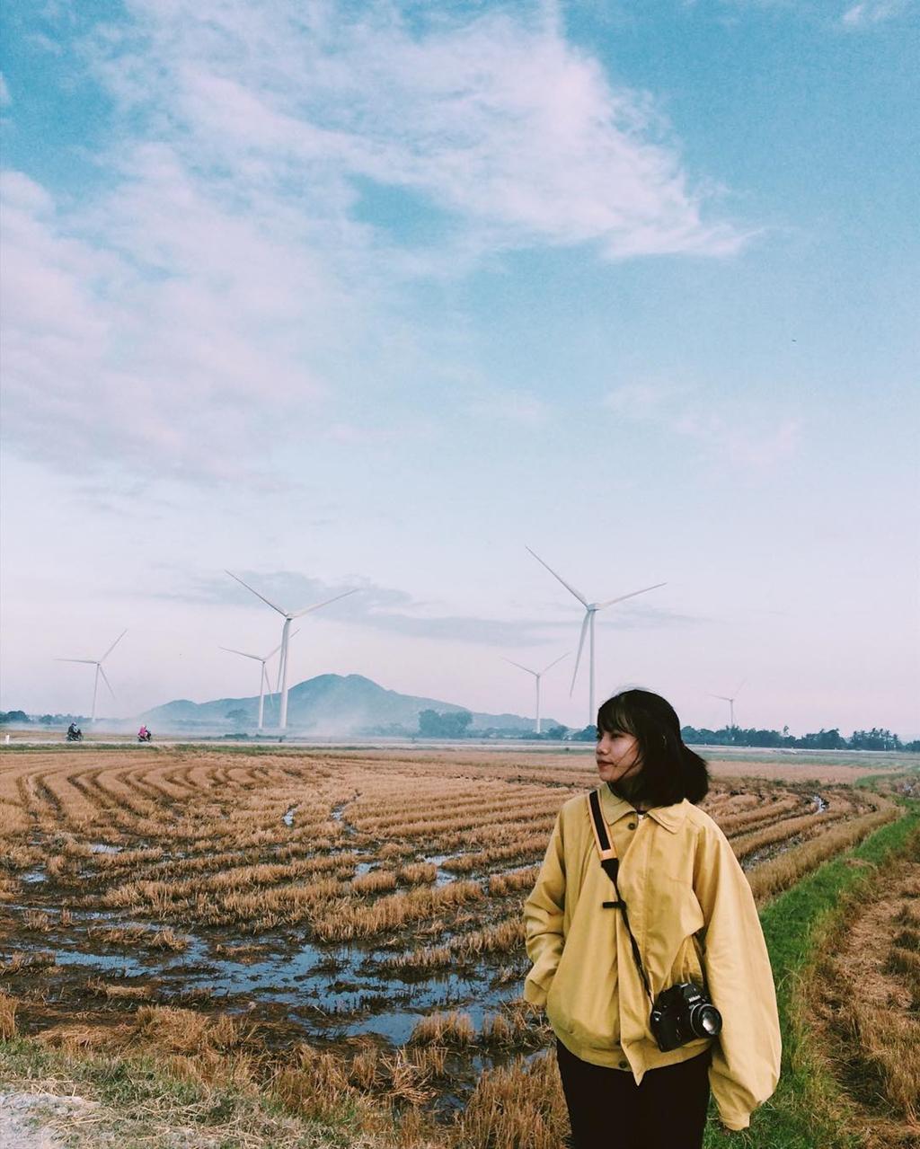 4 cánh đồng quạt gió ở Việt Nam được hội mê sống ảo săn lùng Ảnh 3