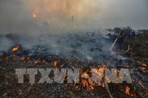 Indonesia: Hơn 900.000 người bị bệnh về đường hô hấp do cháy rừng Ảnh 1