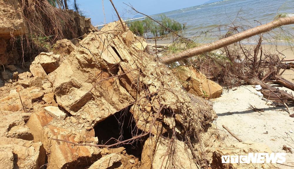 Rừng thông ven bờ Cửa Đại bị sóng biển 'nuốt chửng' Ảnh 2