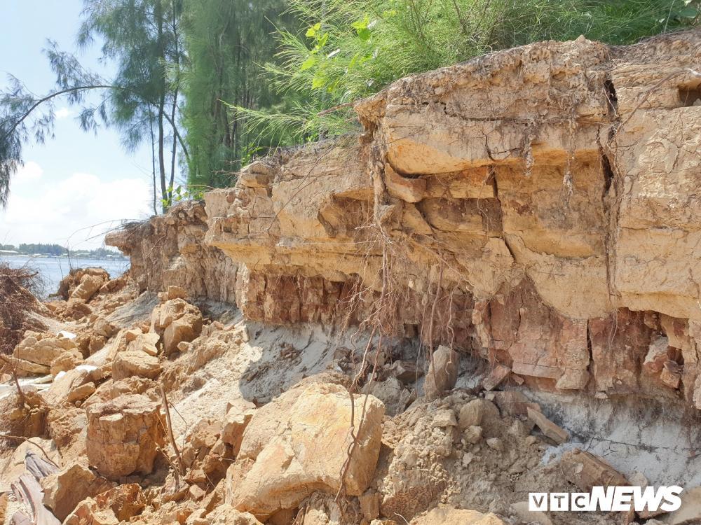 Rừng thông ven bờ Cửa Đại bị sóng biển 'nuốt chửng' Ảnh 5