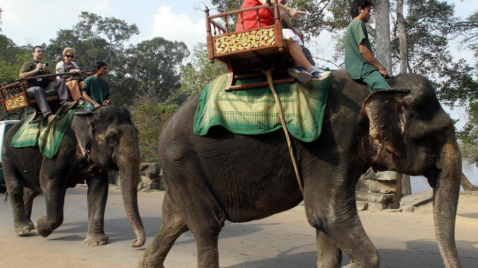 Campuchia cấm sử dụng voi phục vụ du khách tại quần thể đền Angkor Wat Ảnh 1