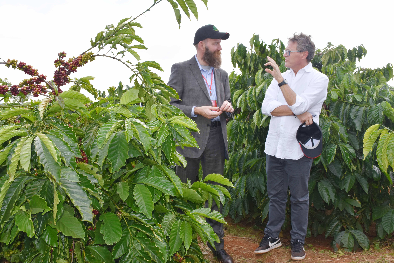 Đắk Nông: Hiệu quả cao khi trồng xen mắc ca với cà phê Ảnh 2