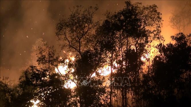Điện Biên: Rừng cháy lớn trong nhiều giờ Ảnh 1