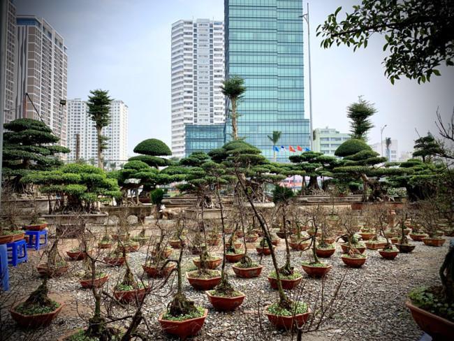 Sành điệu đón Tết cùng mai trắng bonsai Ảnh 2