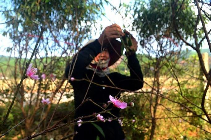 Nghệ An: Khóc, cười cùng hoa Ảnh 1