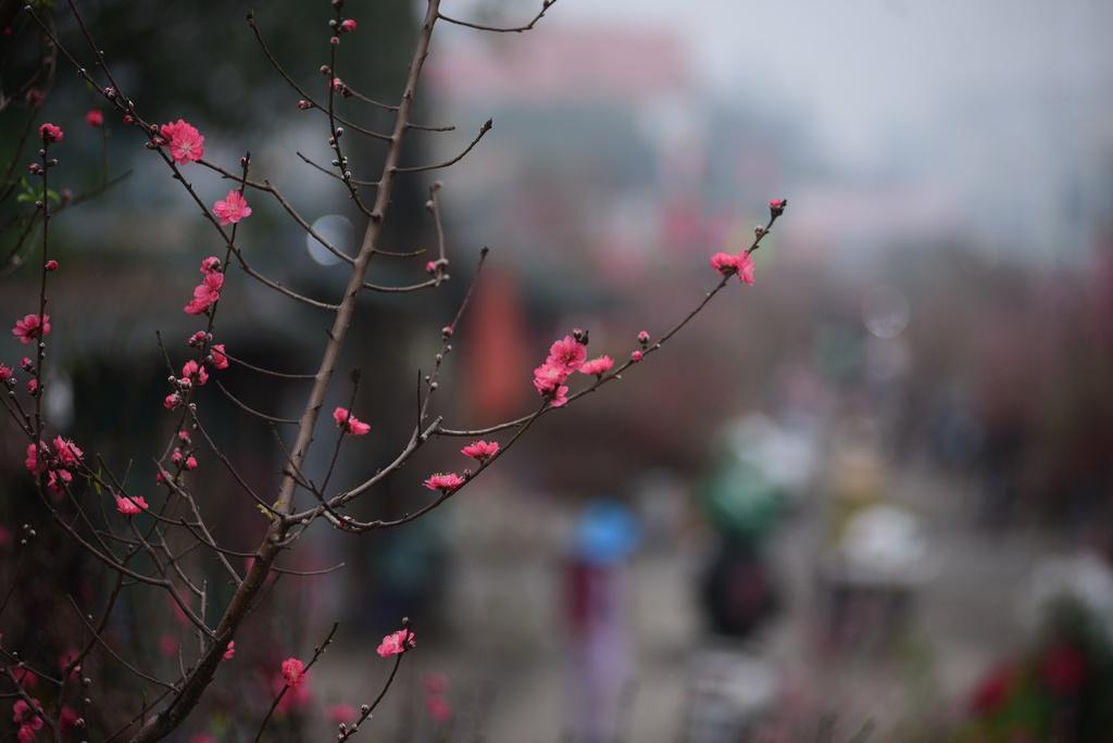 Đào bung nở ở chợ hoa lớn nhất Thủ đô Ảnh 9