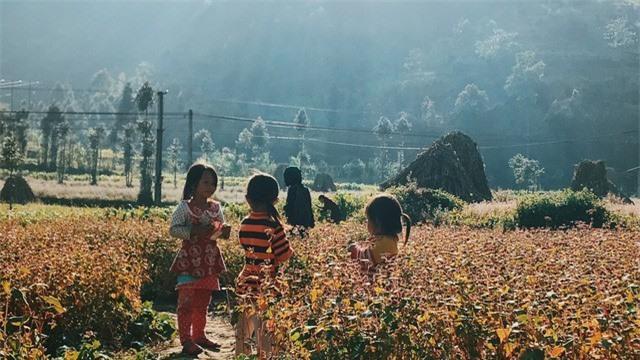 Sắc vàng hoa cải sưởi ấm Hà Giang ngày đông Ảnh 8
