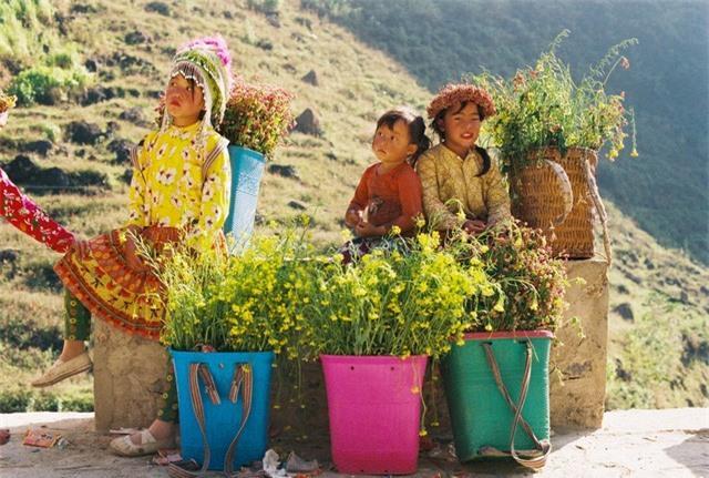 Sắc vàng hoa cải sưởi ấm Hà Giang ngày đông Ảnh 14
