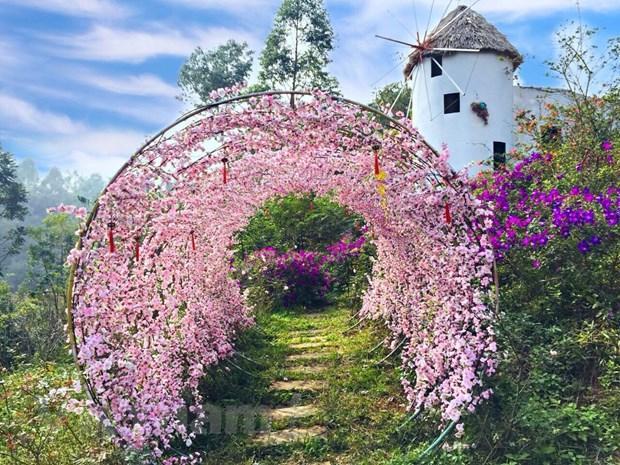 Ngất ngây với Vương quốc hoa Đỗ quyên rực rỡ ở Vĩnh Phúc Ảnh 5