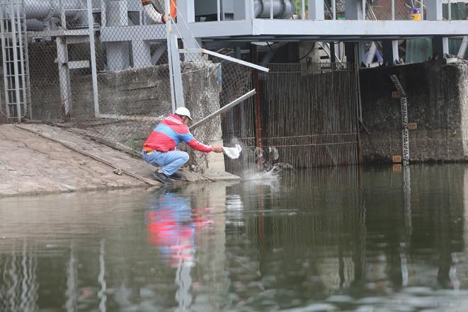 Cá chép ông Công, ông Táo ngắc ngoải vì tro, chân hương bị người dân thiếu ý thức thả xuống hồ Ảnh 2