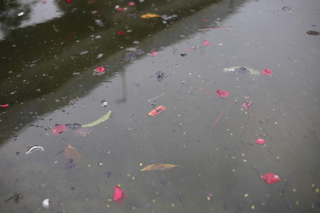 Cá chép ông Công, ông Táo ngắc ngoải vì tro, chân hương bị người dân thiếu ý thức thả xuống hồ Ảnh 6
