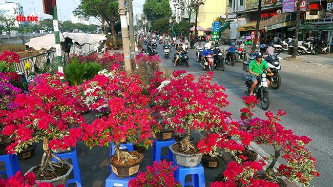 Nhộn nhịp chợ hoa Tết 'trên bến dưới thuyền' đầy sắc màu ở TP Hồ Chí Minh Ảnh 7