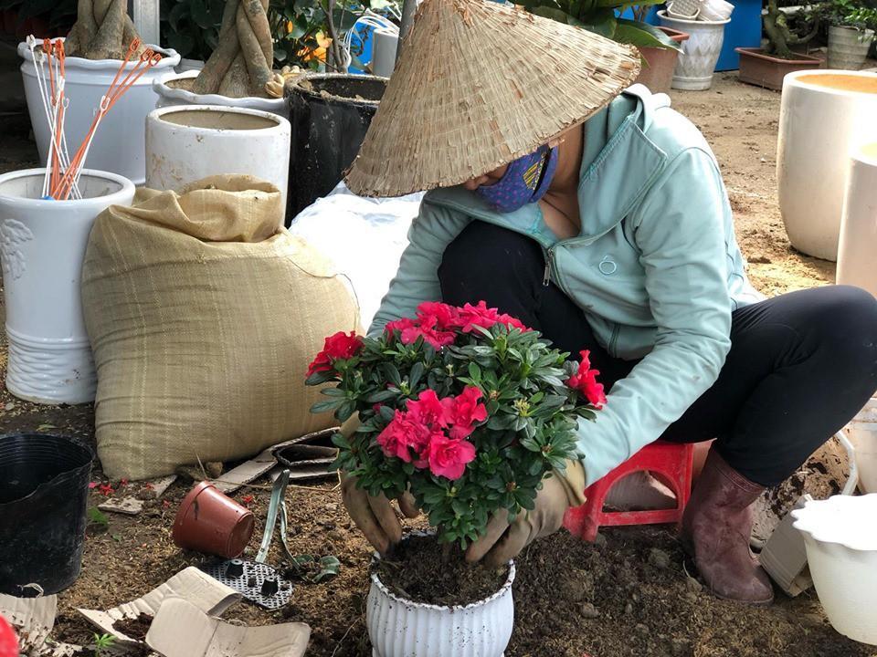 Bưởi diễn Hà Nội về chợ quê miền Trung giá gần 20 triệu đồng/cây hút khách Ảnh 11