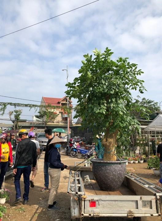 Bưởi diễn Hà Nội về chợ quê miền Trung giá gần 20 triệu đồng/cây hút khách Ảnh 9