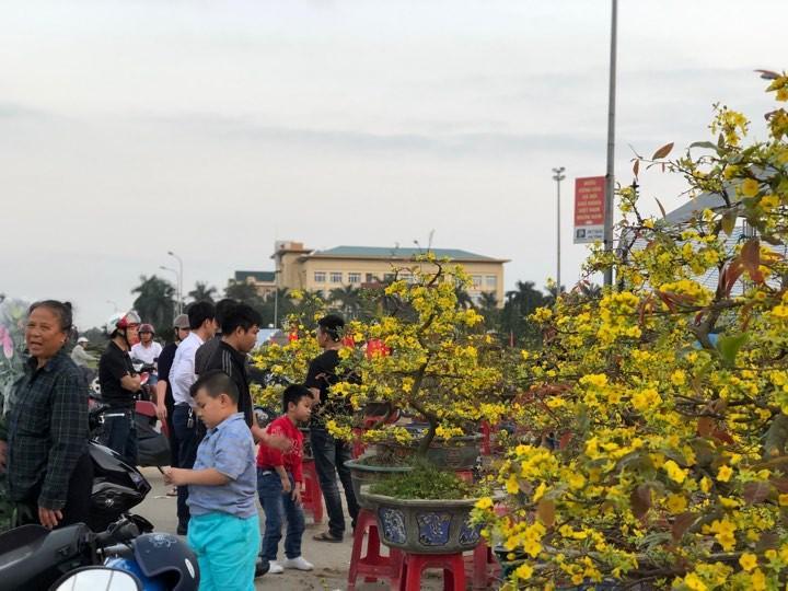 Bưởi diễn Hà Nội về chợ quê miền Trung giá gần 20 triệu đồng/cây hút khách Ảnh 1