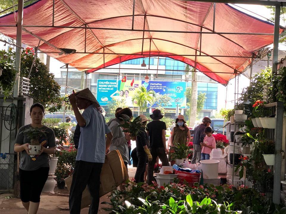Bưởi diễn Hà Nội về chợ quê miền Trung giá gần 20 triệu đồng/cây hút khách Ảnh 8