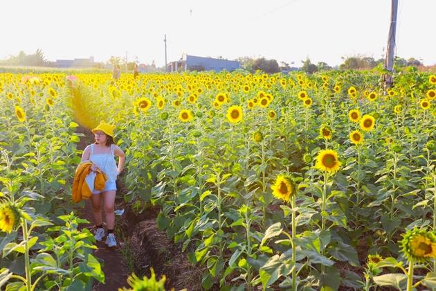 Check-in vườn hoa hướng dương rực rỡ ở Đồng Nai ngày đầu năm mới 2020 Ảnh 8