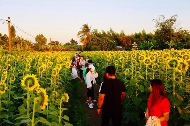 Check-in vườn hoa hướng dương rực rỡ ở Đồng Nai ngày đầu năm mới 2020 Ảnh 2