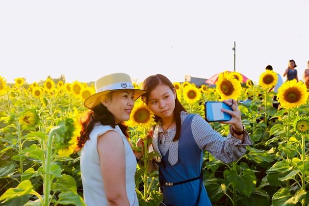 Check-in vườn hoa hướng dương rực rỡ ở Đồng Nai ngày đầu năm mới 2020 Ảnh 5