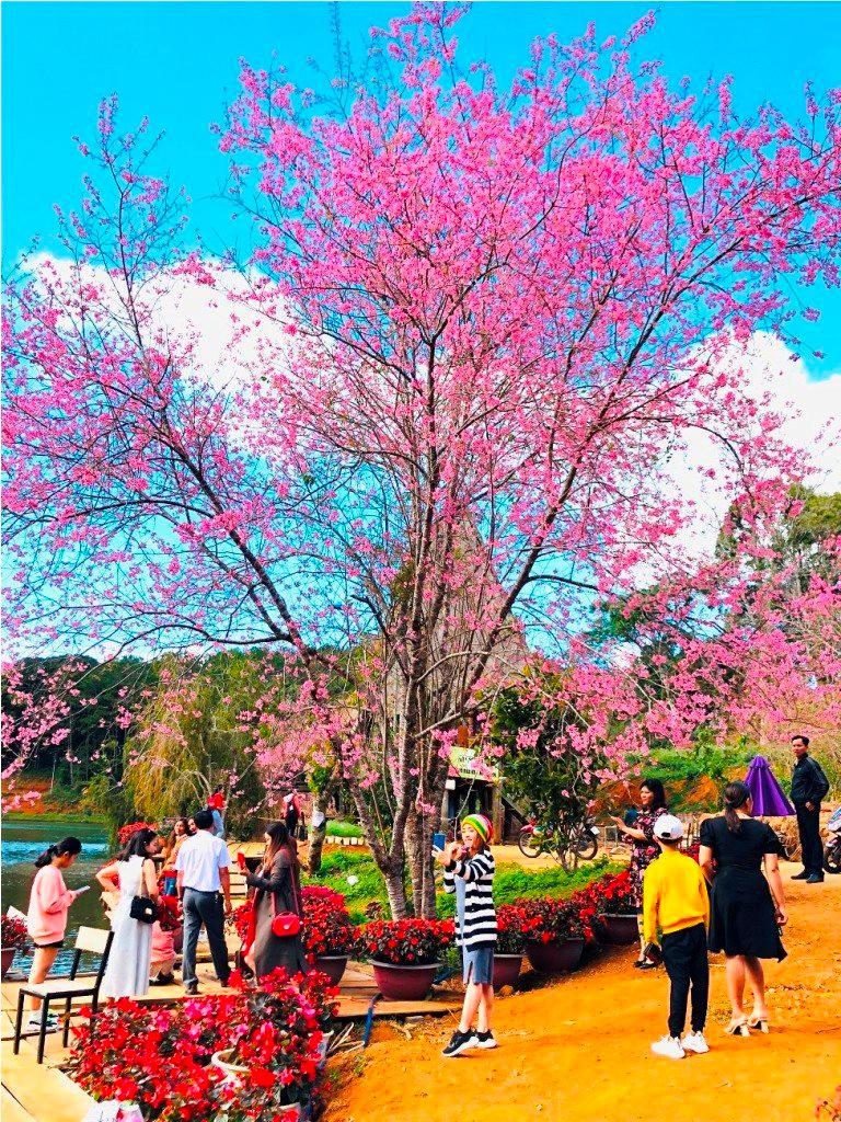 Khu Du lịch sinh thái Măng Đen 'hút' mạnh khách du xuân Ảnh 3