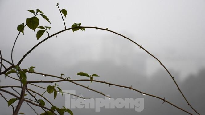 Thời tiết nồm ẩm, trời mù, tầm nhìn hạn chế trong ngày đầu tuần Ảnh 7