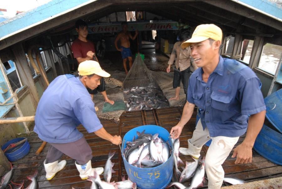 Thanh tra Bộ Nông nghiệp Mỹ đánh giá an toàn thực phẩm với cá tra Việt Nam Ảnh 2