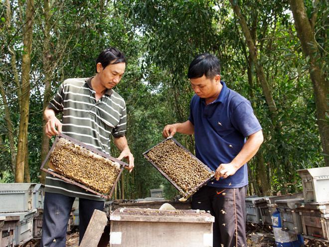 Khởi nghiệp nông nghiệp: Chăn ong theo những mùa hoa Ảnh 1