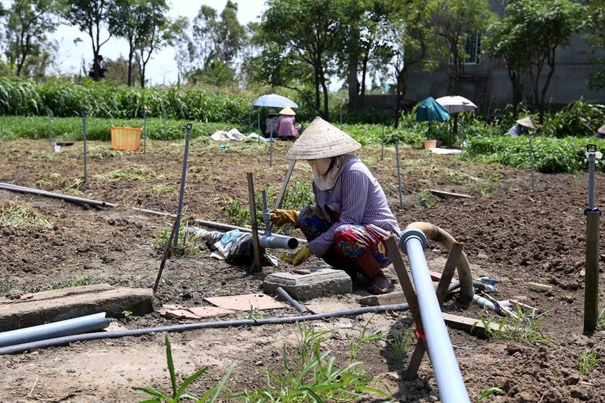 Hình ảnh kênh mương nứt nẻ, cây trồng khô héo ở Tiền Giang Ảnh 9