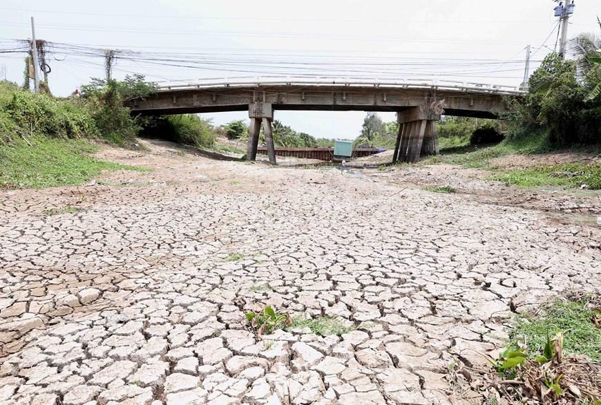 Hình ảnh kênh mương nứt nẻ, cây trồng khô héo ở Tiền Giang Ảnh 1