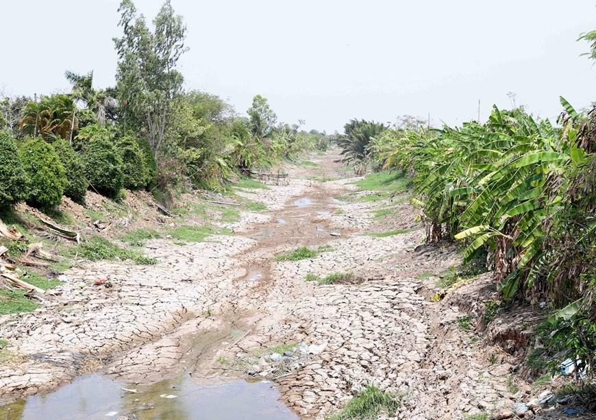 Hình ảnh kênh mương nứt nẻ, cây trồng khô héo ở Tiền Giang Ảnh 8