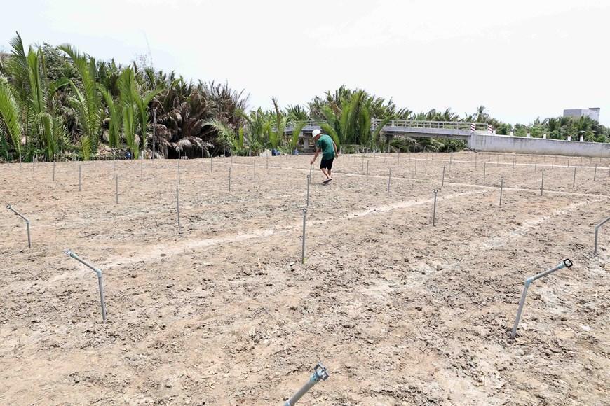Hình ảnh kênh mương nứt nẻ, cây trồng khô héo ở Tiền Giang Ảnh 2