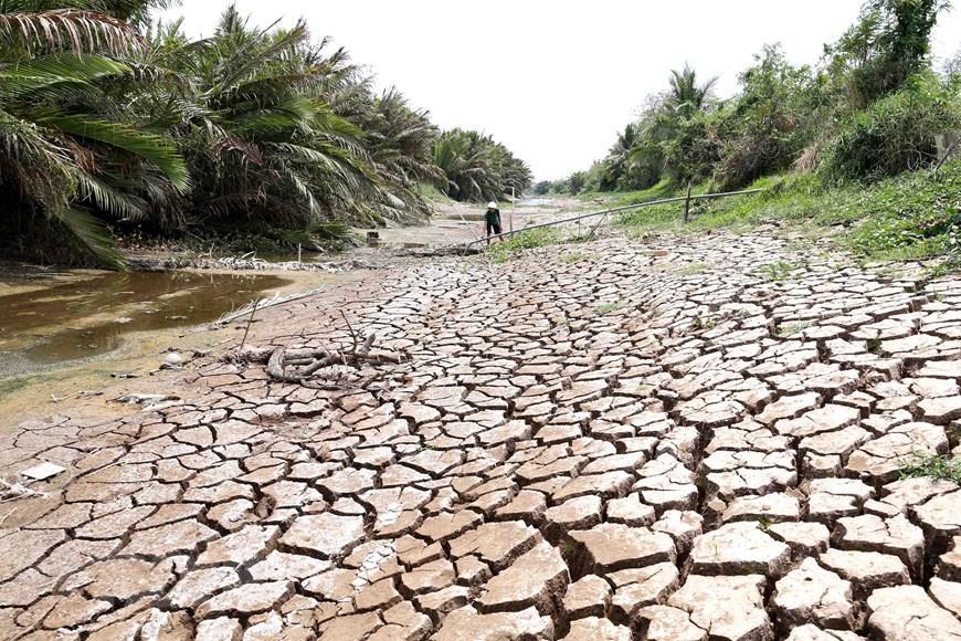 Hình ảnh kênh mương nứt nẻ, cây trồng khô héo ở Tiền Giang Ảnh 4