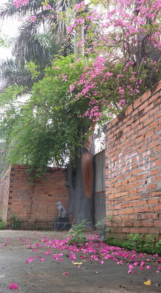 Nhà vườn 10.000m2 của nghệ sĩ Giang còi ngập hoa và trái cây Ảnh 14