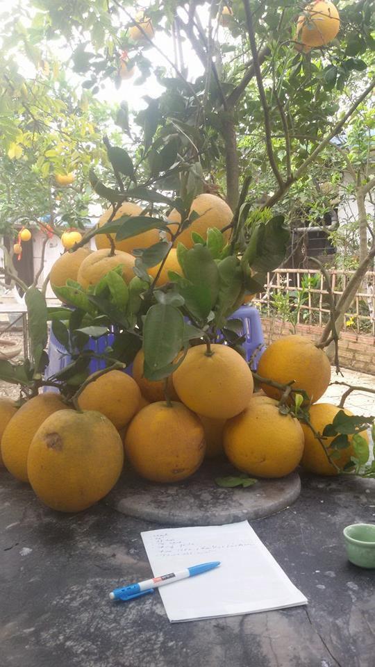 Nhà vườn 10.000m2 của nghệ sĩ Giang còi ngập hoa và trái cây Ảnh 3