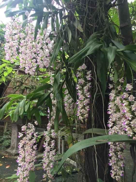 Nhà vườn 10.000m2 của nghệ sĩ Giang còi ngập hoa và trái cây Ảnh 15