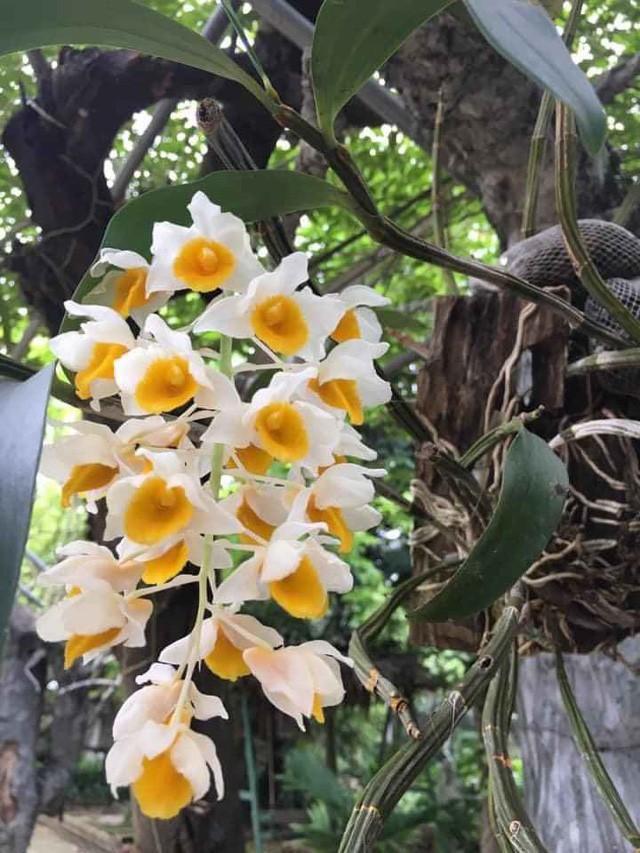 Nhà vườn 10.000m2 của nghệ sĩ Giang còi ngập hoa và trái cây Ảnh 16