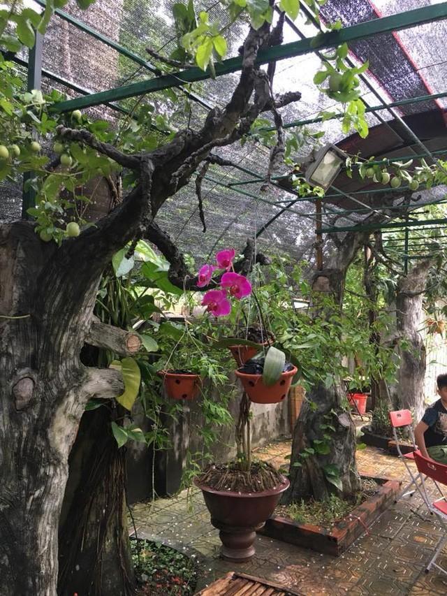 Nhà vườn 10.000m2 của nghệ sĩ Giang còi ngập hoa và trái cây Ảnh 18