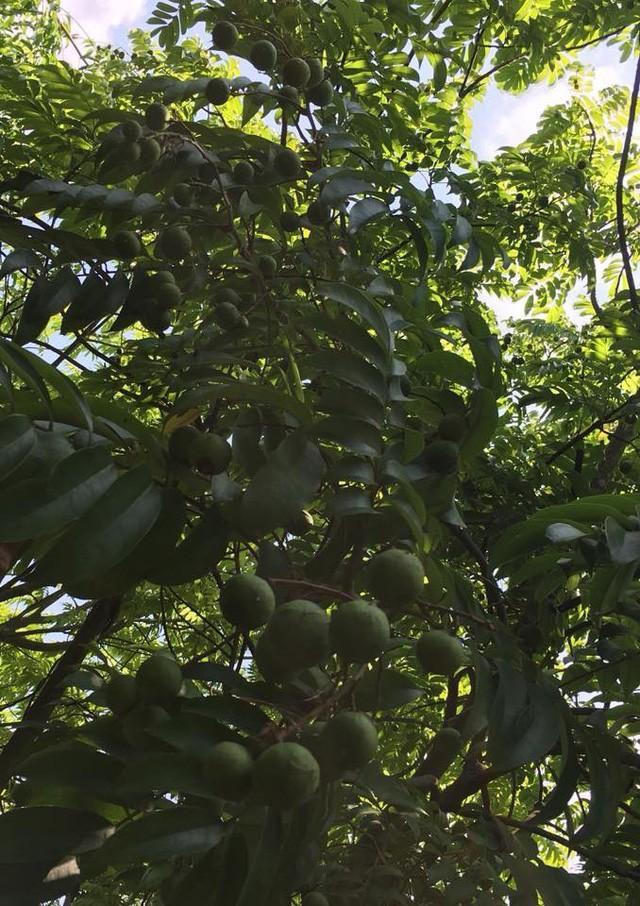 Nhà vườn 10.000m2 của nghệ sĩ Giang còi ngập hoa và trái cây Ảnh 19