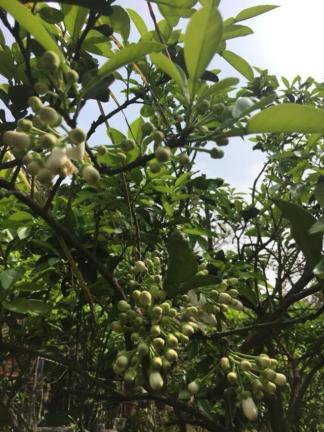 Nhà vườn 10.000m2 của nghệ sĩ Giang còi ngập hoa và trái cây Ảnh 4