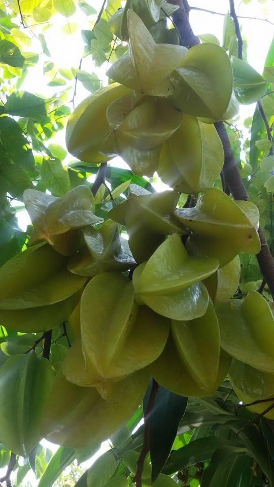 Nhà vườn 10.000m2 của nghệ sĩ Giang còi ngập hoa và trái cây Ảnh 29
