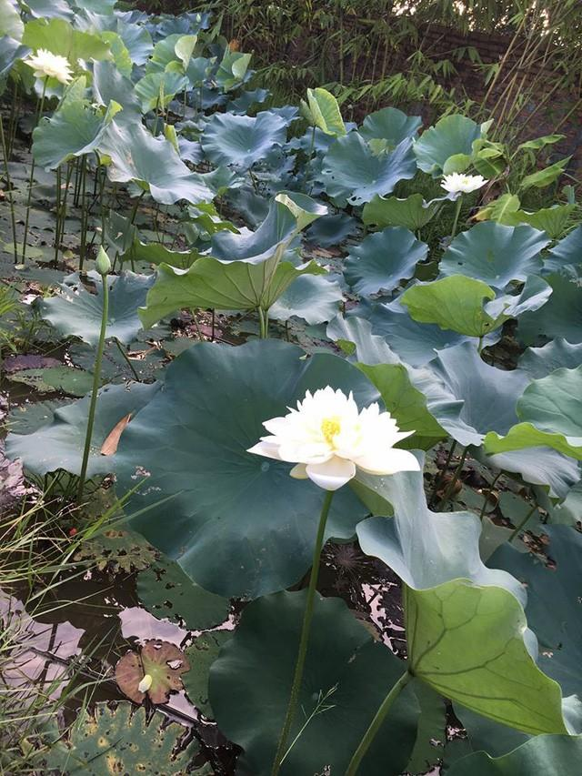Nhà vườn 10.000m2 của nghệ sĩ Giang còi ngập hoa và trái cây Ảnh 12