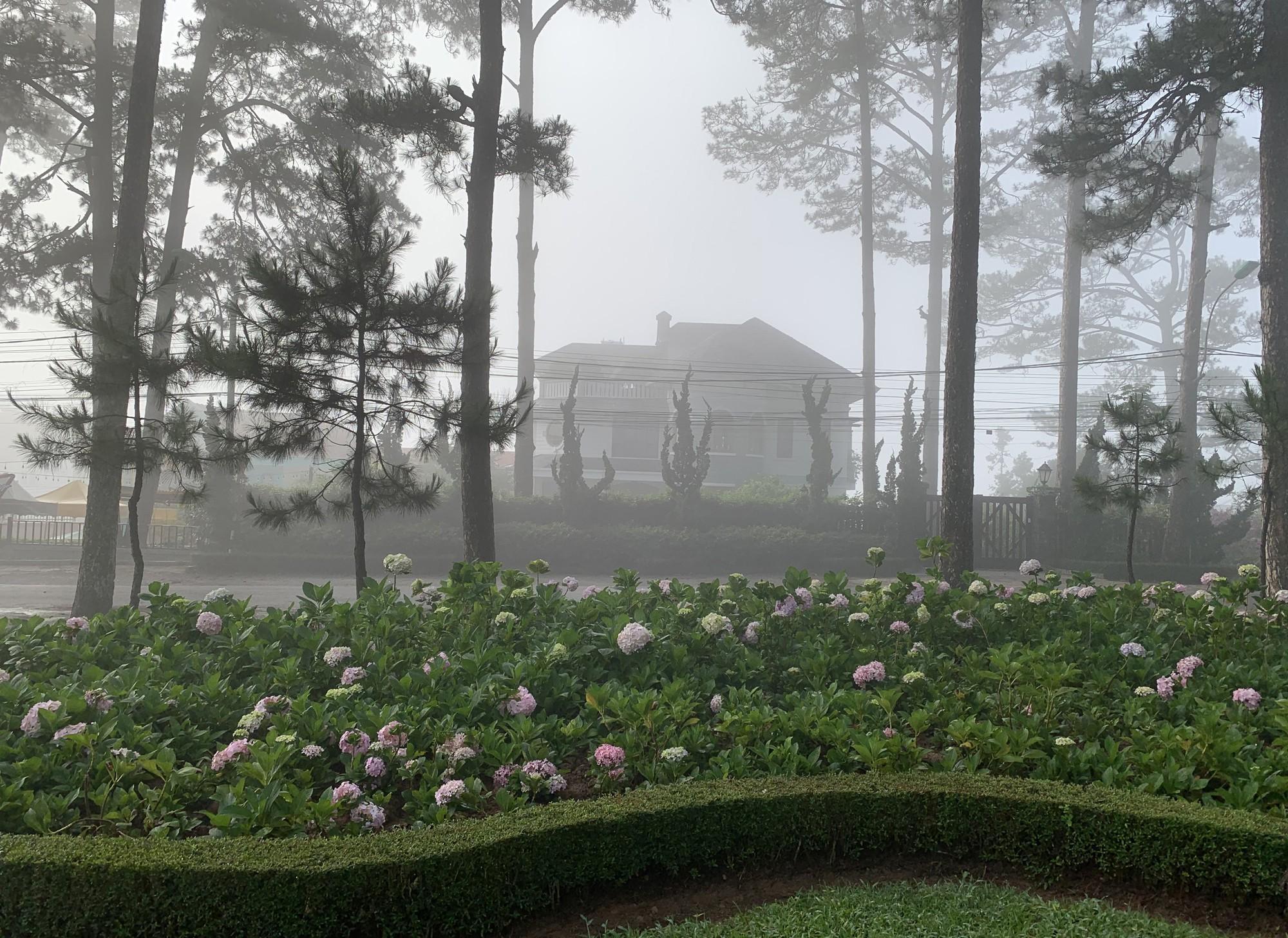 Bất ngờ Đà Lạt đẹp mê hoặc giữa 'biển sương', huyền ảo như chốn bồng lai Ảnh 3