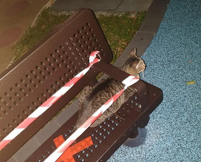 Lũ mèo nằm dài trên bàn ghế công cộng bị niêm phong vì dịch Ảnh 7