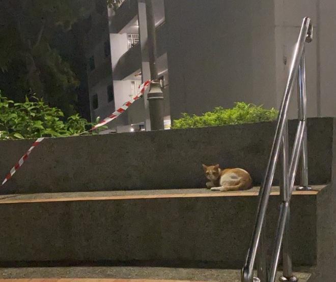 Lũ mèo nằm dài trên bàn ghế công cộng bị niêm phong vì dịch Ảnh 6